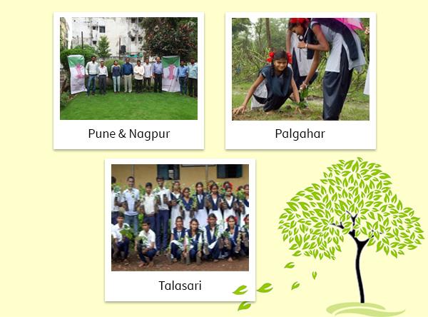 Tree Sapling Planted in Talasari, Pune, Nagpur & Palghar